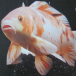 110501-fish-raum